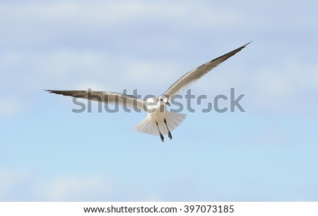 Bird flying is a black and white detailed closed of a a beautiful seagull spreading its wings while in mid flight. - stock photo
