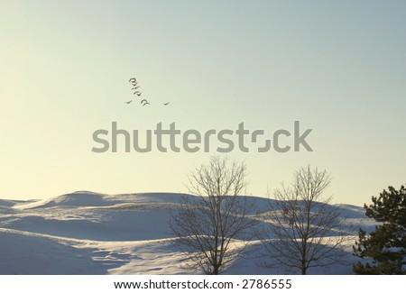 bird flying on golf-course - stock photo