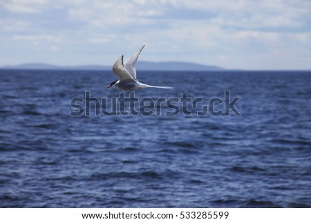 Bird flying over the sea in the background of the island plan