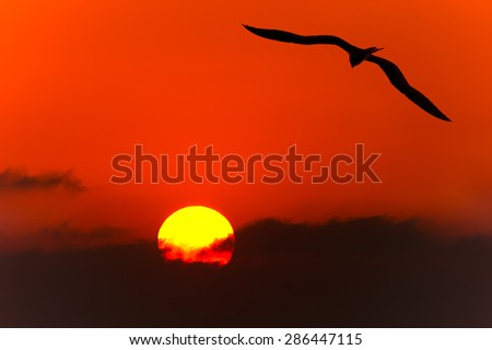Bird flying silhouette above the clouds as the sun sets in the background. - stock photo