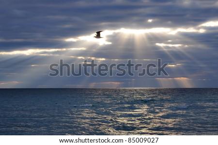 bird flying through day break in the morning over the Atlantic Ocean - stock photo