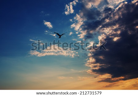 bird flying through dramatic sunset clouds