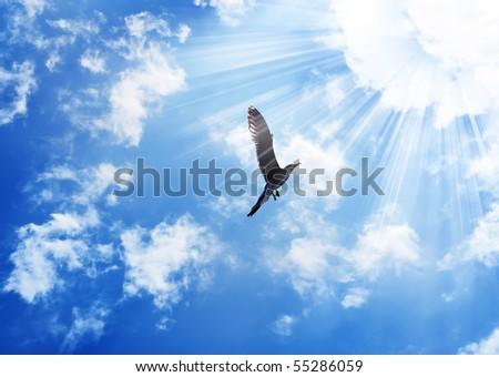 Bird flying to the sun - stock photo