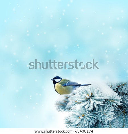 bird (great titmouse ) in winter time - stock photo