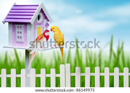 bird house and two parrots - stock photo