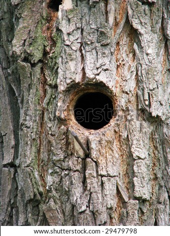 Bird house, bark of tree with a hollow, invoice, texture
