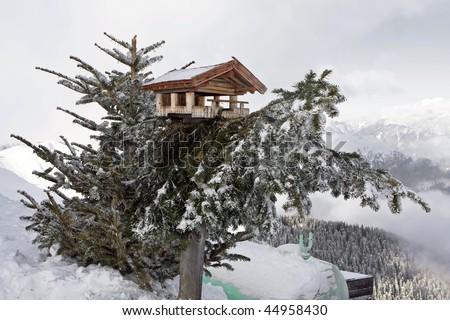 Bird house on pine tree - stock photo