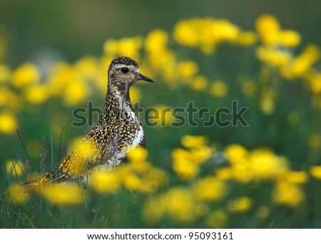 Bird in green grass and yellow flowers