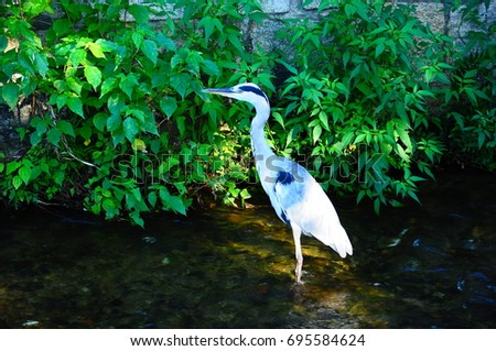 https://thumb7.shutterstock.com/display_pic_with_logo/167494286/695584624/stock-photo-bird-in-river-kyoto-695584624.jpg