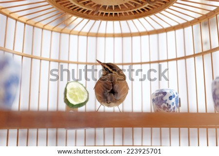 Bird in the cage