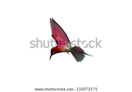 Bird isolated on white background - stock photo