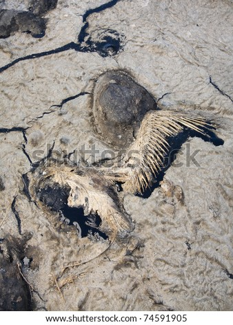 bird killed in Gulf of Mexico oil spill disaster