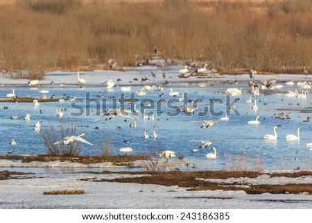 Bird lake in early spring - stock photo