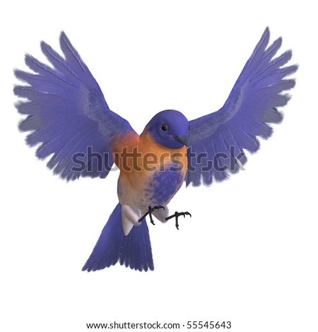 Bird Male Western Bluebird. 3D rendering with clipping path and shadow over white