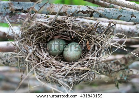 bird nest in nature