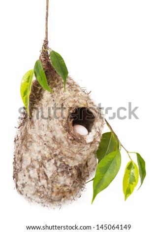 Bird nest isolated on white background - stock photo