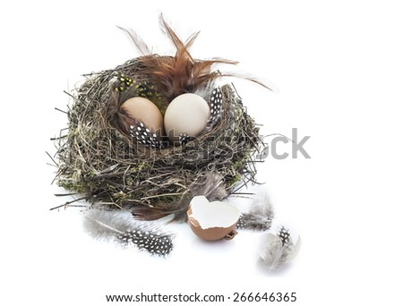 Bird nest with eggs on white background - stock photo