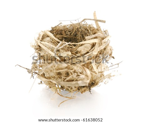 bird nest with reflection on white background
