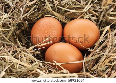 Bird nest with three eggs - stock photo