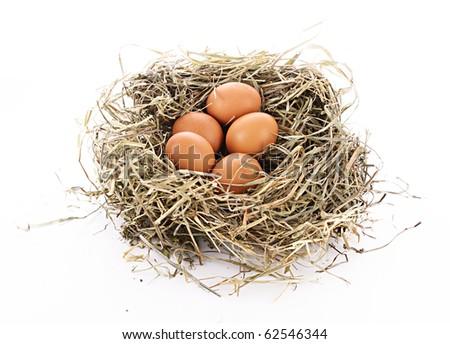 Bird nest with three eggs isolated on white - stock photo