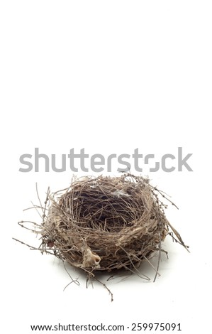 bird nest with white background - stock photo