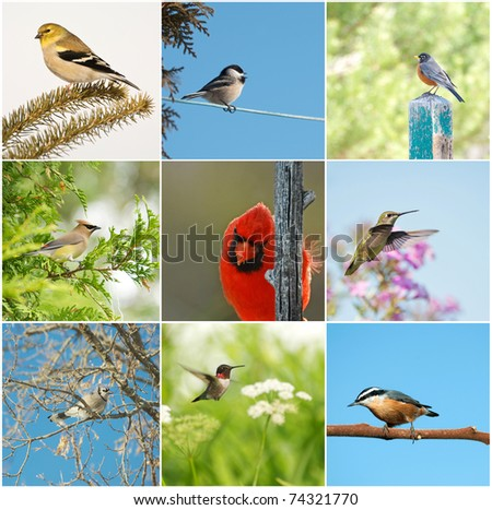 Bird, North American birds in summer collage. - stock photo