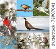 Bird, North American winter birds collage. - stock photo