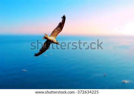 Bird of freedom fly over the sea and mountains in the clear sky. Background is pink and blue. - stock photo
