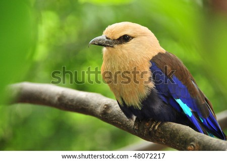 Bird on a branch - stock photo