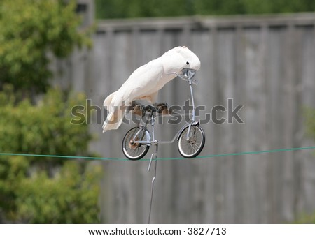 bird on a bycycle - stock photo