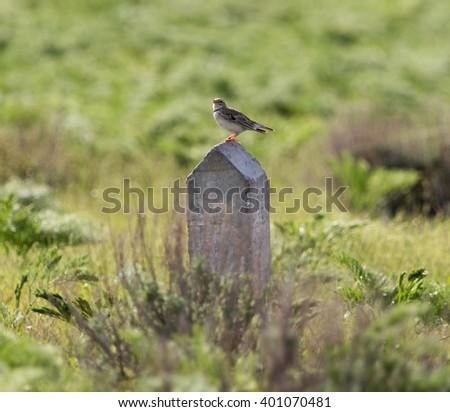 bird on a concrete pillar in nature - stock photo