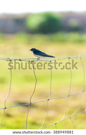 Bird on barbed wire fence - stock photo