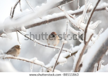 Bird on branch with ice - stock photo