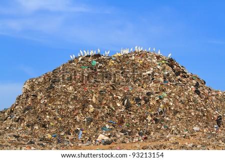 Bird on mountain of garbage - stock photo