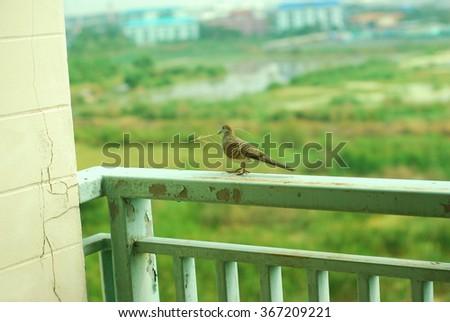 bird on terrace - stock photo
