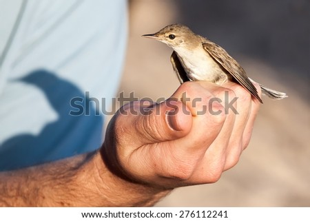 bird on the arm - stock photo