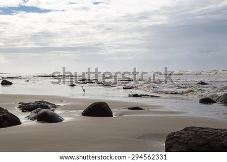 Bird on the sea shore after a storm. A seascape photography with a bird and rocks at the sea shore.