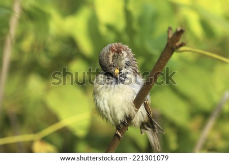 bird on the white background  - stock photo