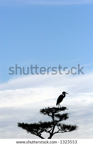 Bird on tree silhouetted. - stock photo