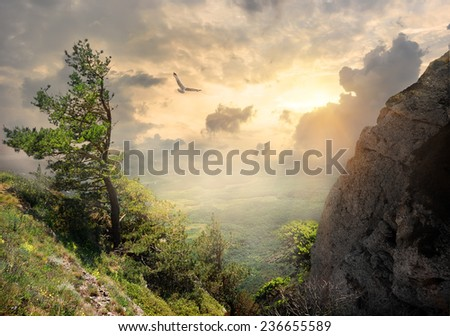 Bird over the big tree on mountain - stock photo