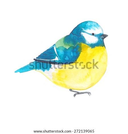 Bird painted on watercolor paper. Etude birds on a white background. Titmouse - stock photo