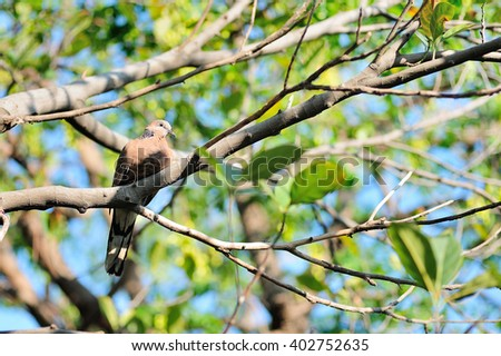 Bird perched on tree branches - stock photo