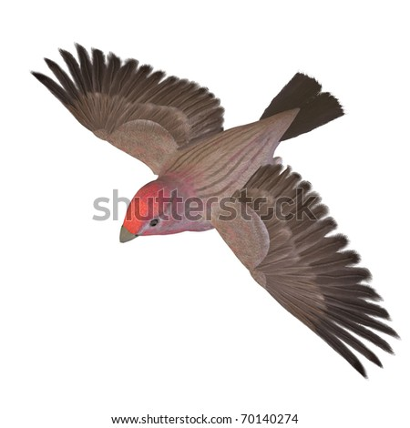 Bird Purple Finch Male. 3D rendering with clipping path and shadow over white