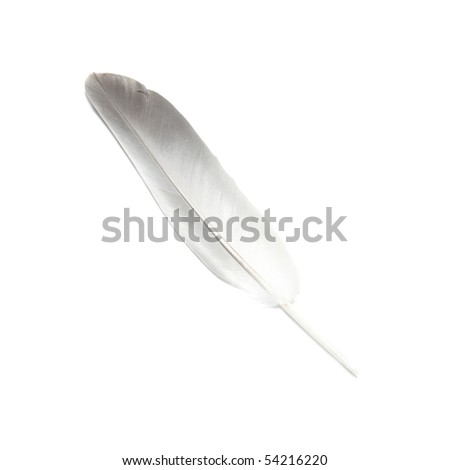 Bird's feather isolated on the white background - stock photo