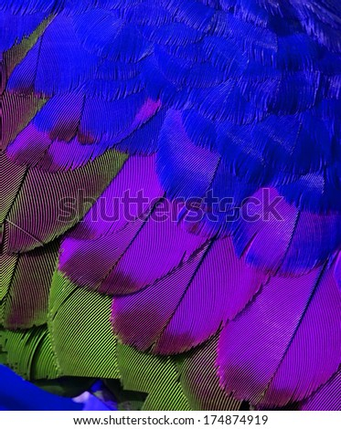 Bird's feathers in very fresh and cool color - stock photo