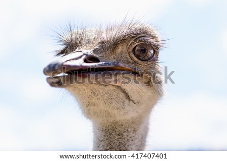bird's head ostrich exotic animals at the zoo - stock photo