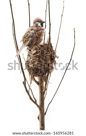 Bird's Nest and sparrows  - stock photo