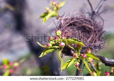 Bird's nest on branches - stock photo