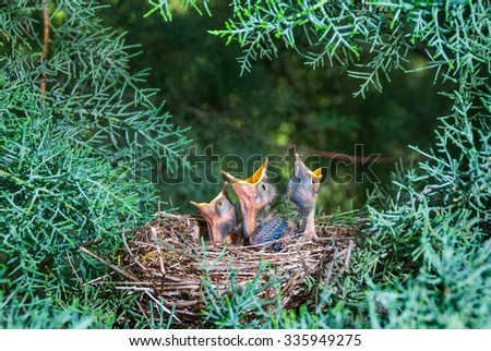 Bird's nest with chicks in a tree - stock photo