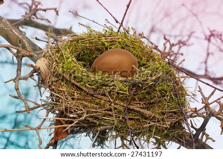 bird's nest with egg